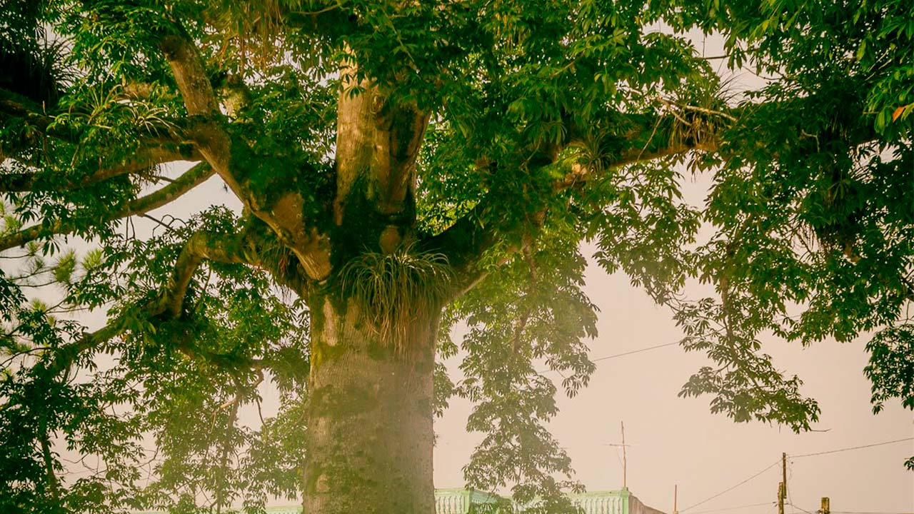 La-Ceiba-Árbol-Sagrado-2